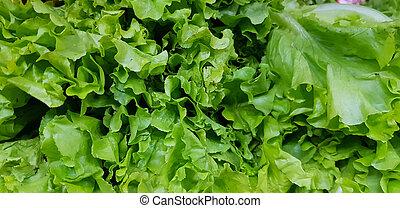 fresh bunch of lettuce leaves in vegetable market for sale