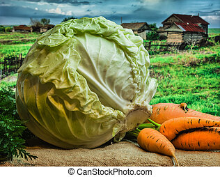 fresh cabbage and carrots
