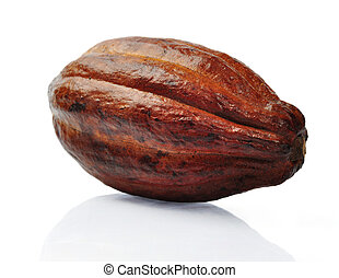 Fresh cacao fruit - Fresh cacao pods isolated on a white...