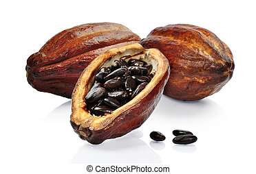 Fresh cacao fruit isolated on a white background