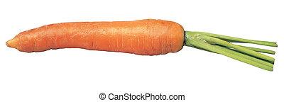 carrot - fresh carrot