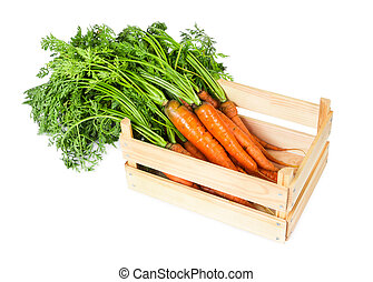 Fresh carrots in a wooden box