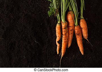 Fresh carrots on dark soil background texture