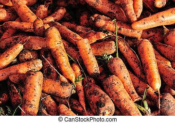 fresh carrots selling at vegetable market