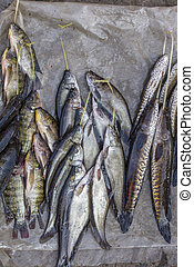 Fresh catch of freshwater fish at the street food market near the Inle Lake in Burma, Myanmar