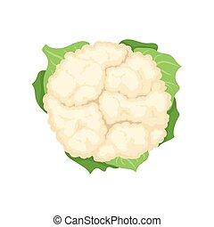 Fresh cauliflower concept. Organic food. Vector illustration.