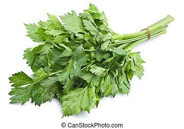 Fresh celery herb leaf on white background