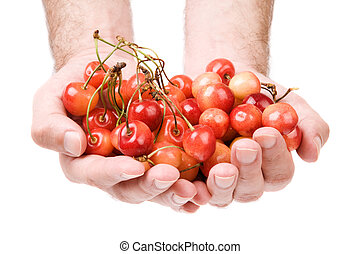 fresh cherry - diet concept with hands and berry isolated on...