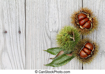 fresh chestnuts bur on a wooden background