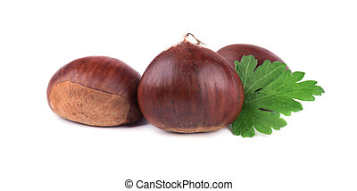 Fresh chestnuts with leaf of parsley isolated on white background. Hippocastanum isolated. Isolated chestnut set with clipping path. Macro