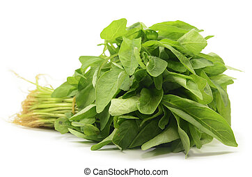 Fresh Chinese spinach isolated