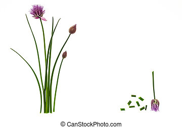 chives on white background with copy space in middle