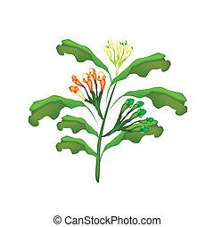 Fresh Clove Plant on A White Background