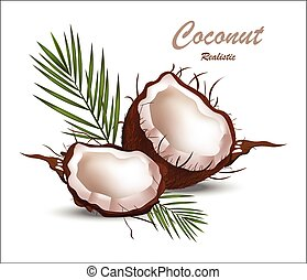 Fresh coconut tropic fruit Realistic Vector