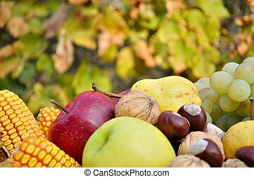 Fresh colorful autumn fruits