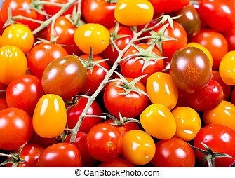 fresh colorful cherry tomatoes