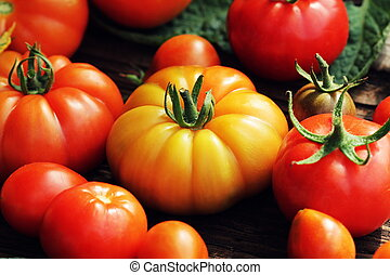 Colorful tomatoes - red,yellow , orange. Harvest vegetable cooking conception.