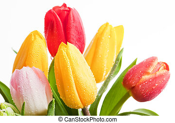 Fresh colorful tulips flowers isolated on white. Mothers...