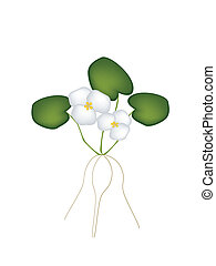 Fresh Common Frogbit Plant on White Background