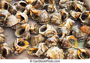 Fresh conch - Seafood: Background of live conch