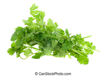 fresh coriander (cilantro) herb isolated on a white...