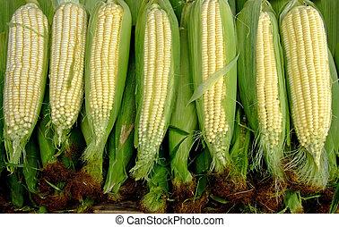 Fresh corn clips