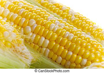 Close up of fresh tasty corn on the cob