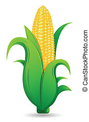 illustration of fresh corn with leaf on isolated white background