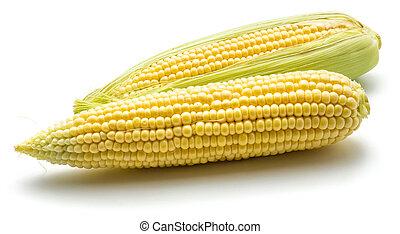 Fresh corn isolated on white