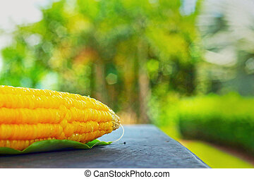 Fresh corn on the table.