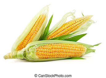 fresh corn vegetable with green leaves isolated on white ...