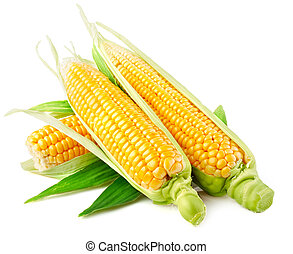 fresh corn vegetable with green leaves isolated on white background