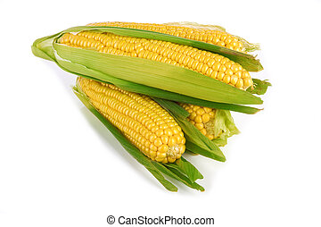 corn - fresh corn vegetable with green leaves on white