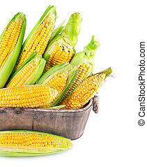 Fresh corn with green leaf in wooden basket