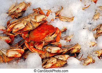 Fresh Crab on Ice