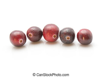 Fresh Cranberry isolated on white - Five cranberries in row ...