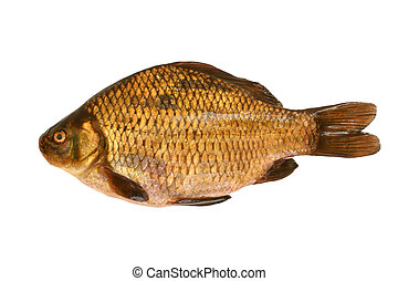 Fresh crucian isolated on a white backround