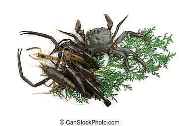 fresh crustacean