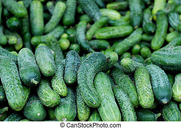 fresh cucumbers for sale