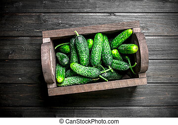 Fresh cucumbers in the box.