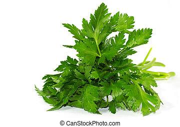 fresh curly leaf parsley