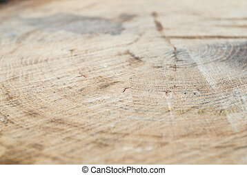 Fresh cut deciduous trees with growth rings, texture, signs