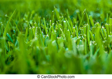 Fresh cut of lawn grass in the early morning with sunshine