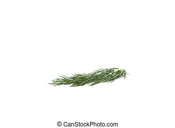 Fresh dill isolated on white background. Copy space