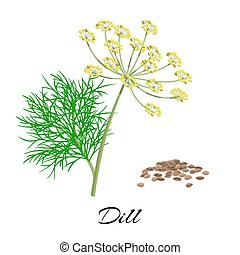 Fresh dill isolated on white background. Vector...