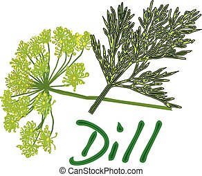 fresh dill vector on white background