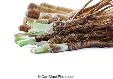 Fresh Dong Quai or female ginseng. - Fresh Dong Quai roots...