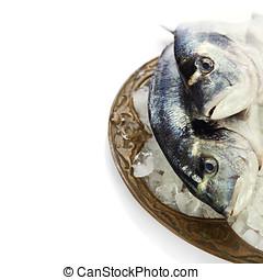 fresh dorada fish on ice - food and drink