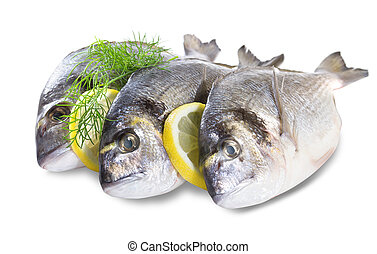 Fresh dorado fish isolated on white background