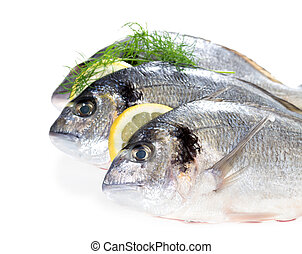 Fresh dorado on white background